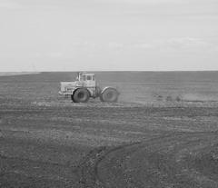 Урожай Новикова