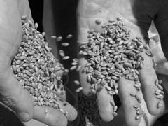 Мнимое зерно