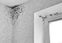 Грибок на стенах— не единственная проблема новых домов Жигулевска