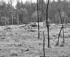 Лес почти даром