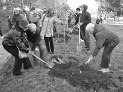 В ходе подготовки к празднованию 100-летия Союза журналистов России в Самаре создали аллею каштанов