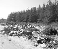 Леса под Сызранью могут выглядеть и так