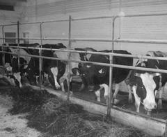Все содержимое ГУП «Усинское» передано «Домашней ферме».
